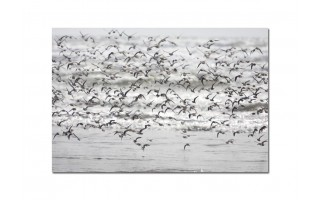 Obraz szklany 120x80 Ptaki (260275)