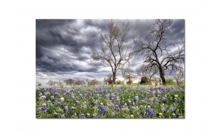 Obraz szklany 120x80 Pole kwiatów (260249)