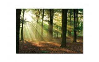 Obraz szklany 120x80 Promienie w lesie