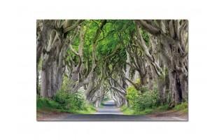 Obraz szklany 120x80 Aleja drzew