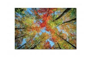 Obraz szklany 120x80 Drzewa