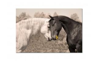Obraz szklany 120x80 Konie