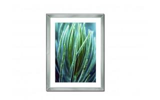 Obraz szklany 60x80 Roślina