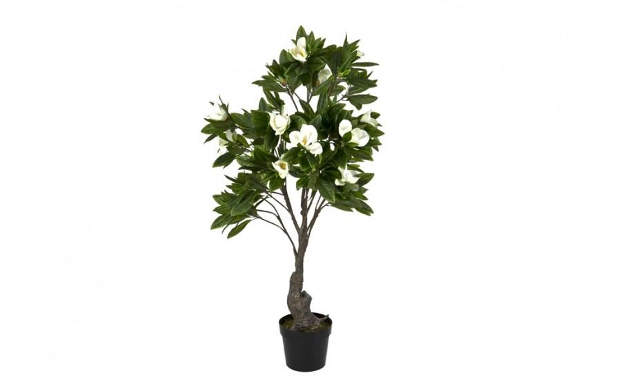 Roślina doniczkowa Magnolia 170cm PROMO