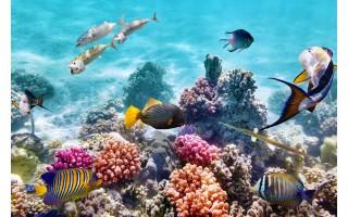Obraz szklany 120x80 Coral reef