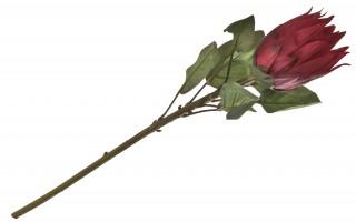 Protea kwiat sztuczny 70 cm