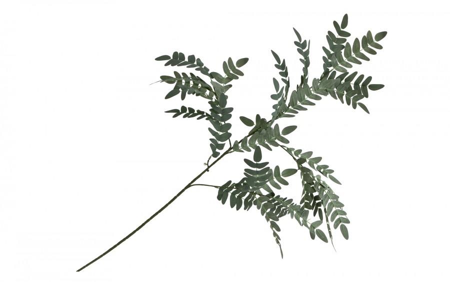 Paprotka szara - gałązka ozdobna