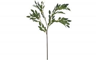 Zielona gałązka ozdobna